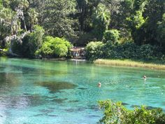 Rainbow River is a popular water recreation area, a hot spot for all-day tubing trips, boating, fishing, swimming, snorkeling, kayaking, canoeing, scuba diving, etc. located in Dunnellon, Florida.