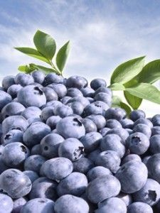 Blueberries Can Lower Risk of Alzheimer's - Blueberries From Florida Blueberry Varieties, Blueberry Bushes, Blueberry Benefits, Highbush Blueberry, Food Facts, Alzheimers, Planting Seeds, Sweet Desserts, Lawn And Garden