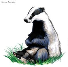 Badger  Digital art-Photoshop cs6