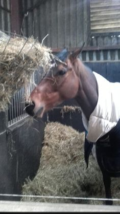 Horse Racing, Horses, Animals, Animales, Animaux, Horse, Words, Animal, Animais