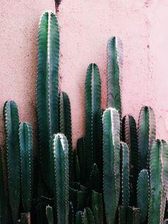 rosa og grønt