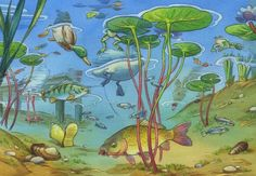 Nocturnal Animals, Book Illustration, Aquarium, National Parks, Drawings, Artist, Painting, Dibujo, Ideas