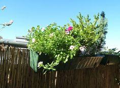 Gemüse & Naschen: Blumenblüten