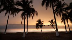 Silhouetted Palms at Playa Tortugas - Riviera Nayarit Vacation Home Destination.
