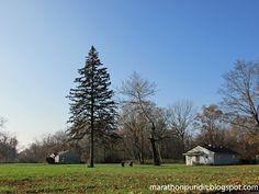 Urban prairie, forsaken land in Detroit's Brightmoor neighborhood.