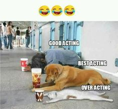 Get Positive Energy for your Life with Awesome Funny Animals memes Pictures with images Looking for the best funny Pictures & images
