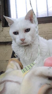 ピコばさまじゃらし - ☆ 点猫 blog ☆ 大阪の日曜猫写真家の猫写真