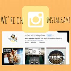 We're on instagram! Follow us for more #vetlife sharing. Clinic, Photo And Video, News, Life, Instagram