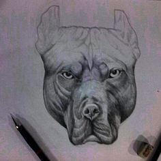 """Pit Bull"" Pencil on paper A3 2014 Hand made by Yanas Kosel"