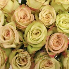 Rose green fashion - Google Search