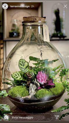 Closed Terrarium Plants, Terrarium Jar, Plants In Jars, Inside Plants, Garden Terrarium, Succulent Terrarium, Cool Plants, House Plants Decor, Plant Decor