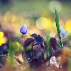 Записная книжка: Про волшебство весеннего леса, страничку и обо всём :)