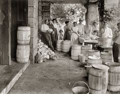 Shorpy Historical Photo Archive :: Liberty Cabbage: 1918