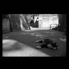 https://flic.kr/p/vKTeBs | Ruby July 2015  #cat #smallcats #blackandwhitephotography