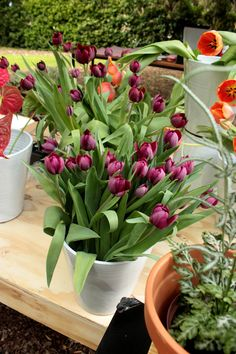 Relish in the delight of nature this Garden Day with Backsberg Flower Crown, Tulip, Bouquet, Events, Garden, Nature, Crown Flower, Floral Crown, Garten
