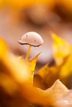 Mushroom by Emyan - Irene Mei