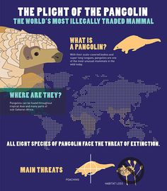 Listing pangolins under US Endangered Species Act | IFAW - International Fund for Animal Welfare