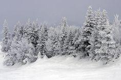 http://images.fineartamerica.com/images-medium-large/snow-on-the-mountain-top-michael-fusco.jpg