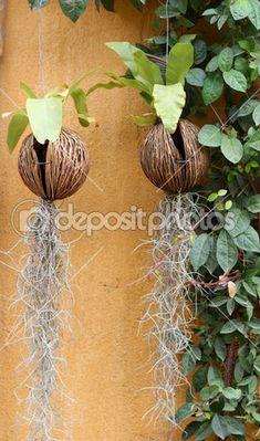 Verde orquídea em casca de coco — Imagem de Stock #44636463