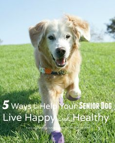 5 tips to help your Senior Dog Live a Happy & Healthy