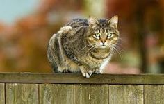 A cat fence can certainly help you keep cats out of your garden; however, as a standalone defence, they probably won't be enough. I Love Cats, Cute Cats, Cats Outside, Cat Fence, World Cat, What Cat, Cat Garden, Lots Of Cats, Cat Enclosure