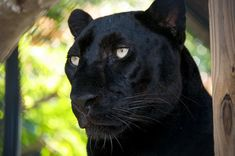 Panther Ridge Conservation Center, Wellington: See 130 reviews, articles, and 122 photos of Panther Ridge Conservation Center, ranked No.1 on TripAdvisor among 14 attractions in Wellington.