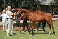 Dutch Warmbloods, Haralson Farm Horses For Sale
