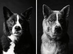 Dog Years: Faithful Friends Then & Now - Photography Book by Amanda Jones