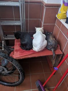 They don't want to look at me after their bath! - 9GAG