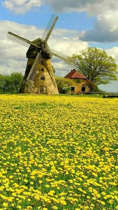 That is quite a thriving field of dandelions! Holland Windmills, Old Windmills, Beautiful World, Beautiful Places, Landscape Photography, Nature Photography, Travel Photography, Water Tower, Jolie Photo