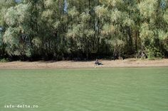 Danube Delta, Golf Courses