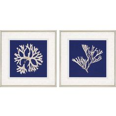 Seaweed on Navy I Giclee 2 Piece Framed Graphic Art Set