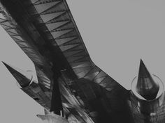 Um 'Pássaro Negro' pelado
