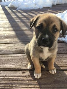 How cute is this dog? #Puppy