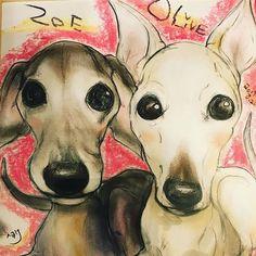 関係者各位〜〜業務連絡〜〜 オリバジ家、無事に帰宅しました。 #Italiangreyhound #イタグレ #イタリアングレーハウンド #dog #犬 #オリーヴ #ゾーイ #OLIVE #ZOE #オリバジ #オリゾイ #海おさ #umiosadobi_nezu