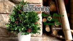 How to Make a Holiday Boxwood Tree (Cheap! Winter Container Gardening, Fine Gardening, Boxwood Tree, Short Plants, Cold Frame, Unique Plants, Local Florist, Seed Starting, Garden Gifts