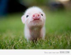 So cute I could faint!
