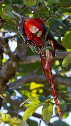 Wildcat Expedition In Corcovado Lapa Rios Bird Of Paradise Yoga Birds Of Paradise Corcovado National Park