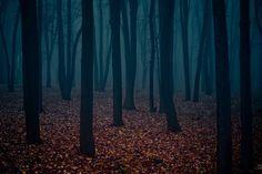 FFFFOUND! | mysterious_forest.jpg (JPEG-Grafik, 1000x669 Pixel) - Skaliert (99%)