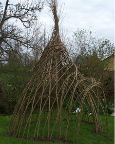 Living Willow Wigwam from Natural Fencing