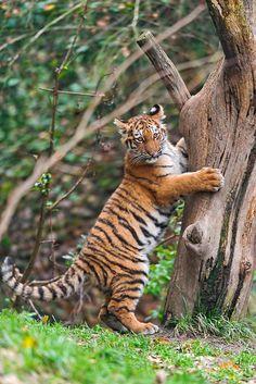 Clinging on the tree | Flickr – Compartilhamento de fotos!