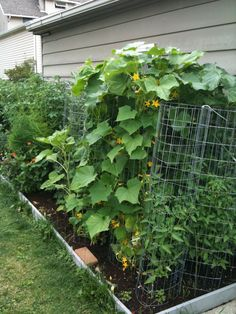 Vertical Gardening - Vegetable Gardening Forum - GardenWeb