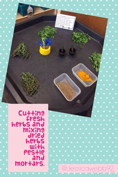 Cutting fresh herbs and mixing dried herbs using pestle and mortars. EYFS
