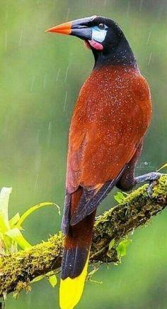 New Bird Pictures Amazing Photos 38 Ideas Flock Of Birds, Kinds Of Birds, All Birds, Little Birds, Love Birds, Angry Birds, Tropical Birds, Exotic Birds, Colorful Birds