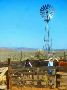 Cowboy Ranch, Cowboy And Cowgirl, American Barn, Blowin' In The Wind, Wind Mills, Ranch Life, Mountain Man, Livestock, Cattle