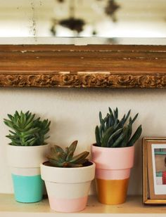 Painted succulent pots with thick border. I like the idea of white with gold or silver thick border at the top.