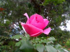 Por uma magnífica flor!