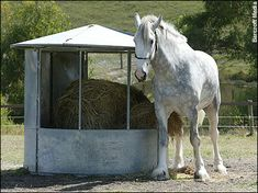 New world record for biggest horse - Telegraph