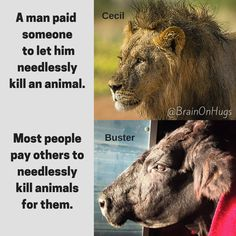 reason to be #vegan stop paying other people to needlessly kill animals