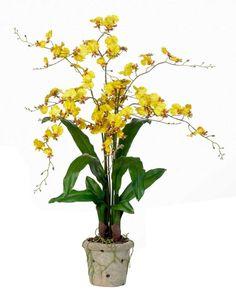 oncidium orchidee zimmerpflanzen bilder schöne zimmerpflanzen